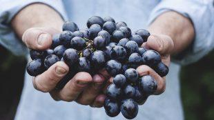 Come si Produce il Vino Dalla Vendemmia alla Tavola